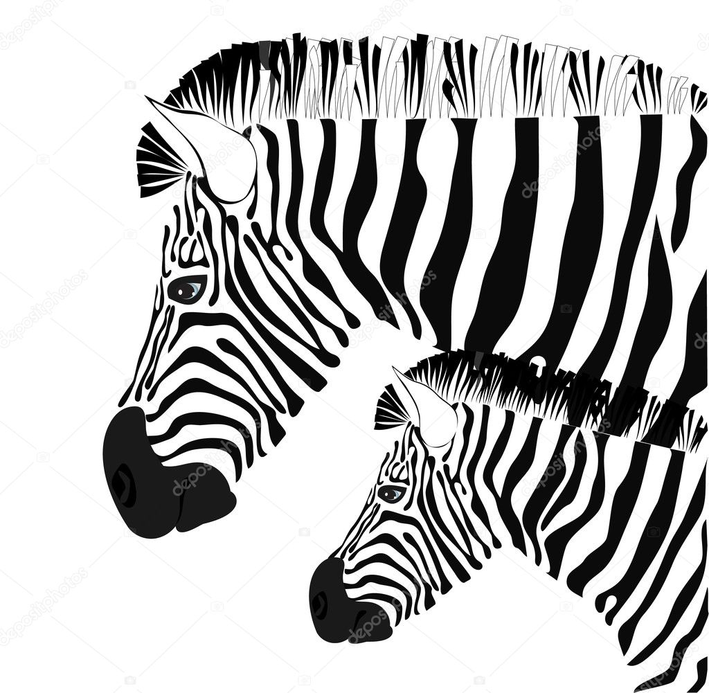 baby zebra colouring pages page 2 lzk gallery