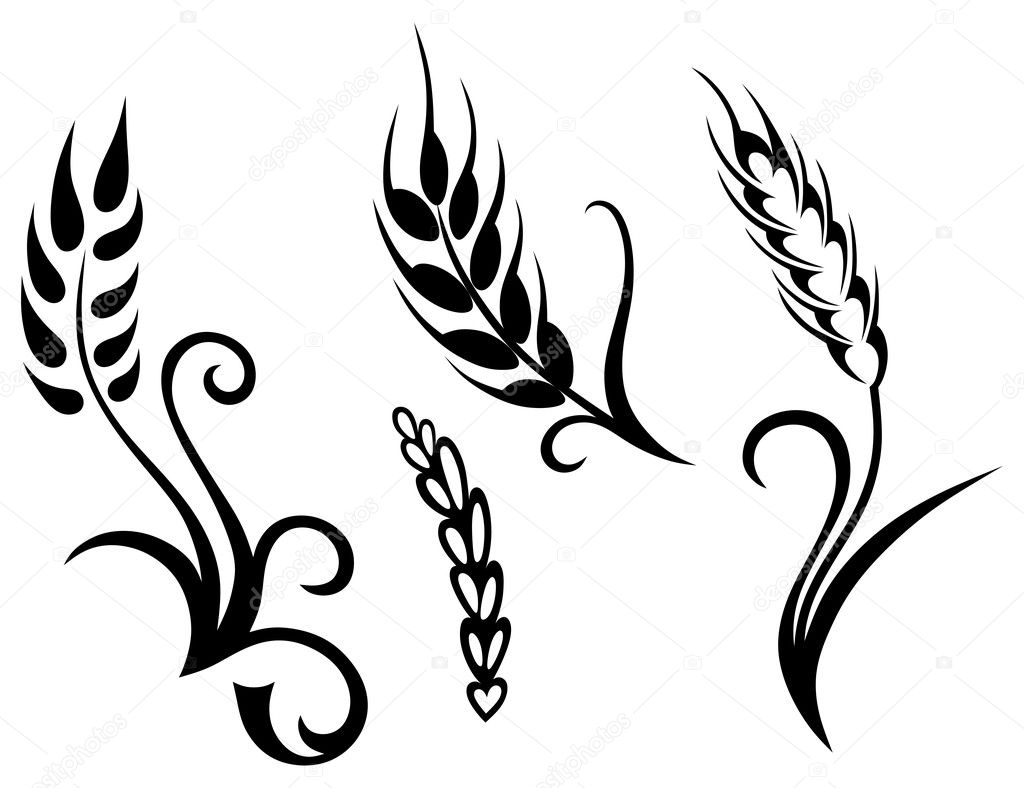 corn stalk outline wheat and rye vector by