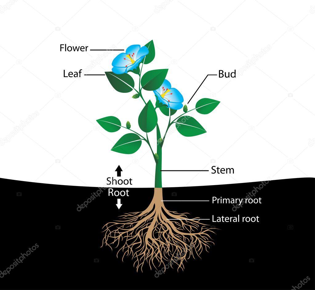 Flor De Estrutura