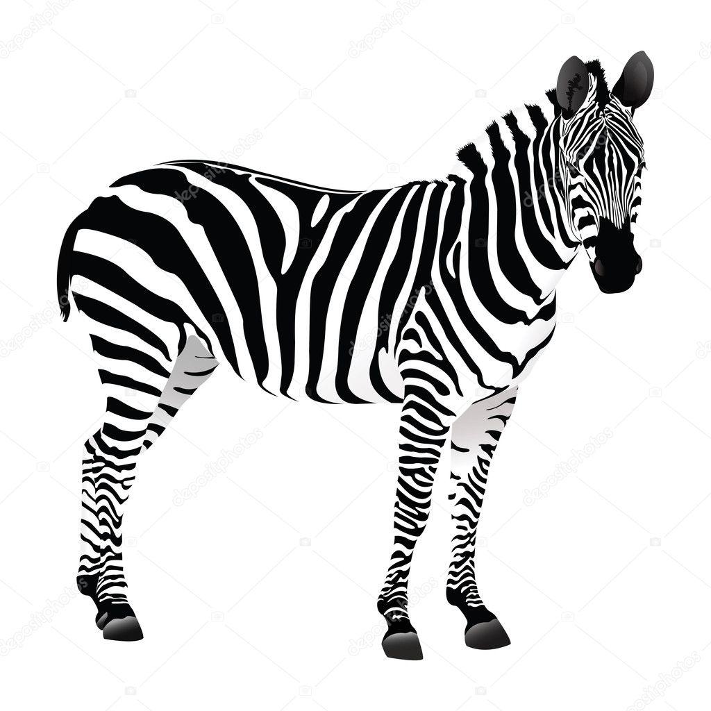 Balack Et Blanc Zebre