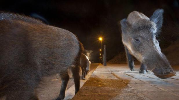 Resultado de imagen para La actividad humana hace que los mamíferos sean cada vez más nocturnos