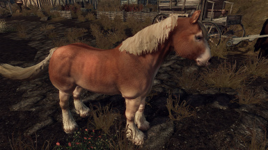 realistic horse breeds # 9