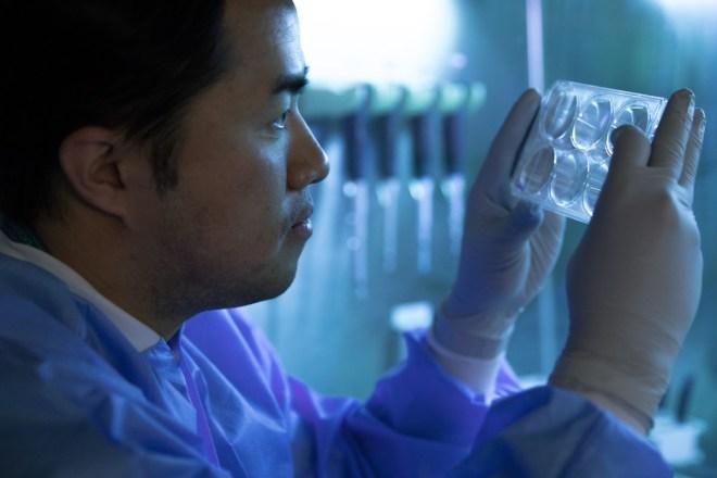 Científico observa un recipiente con células.