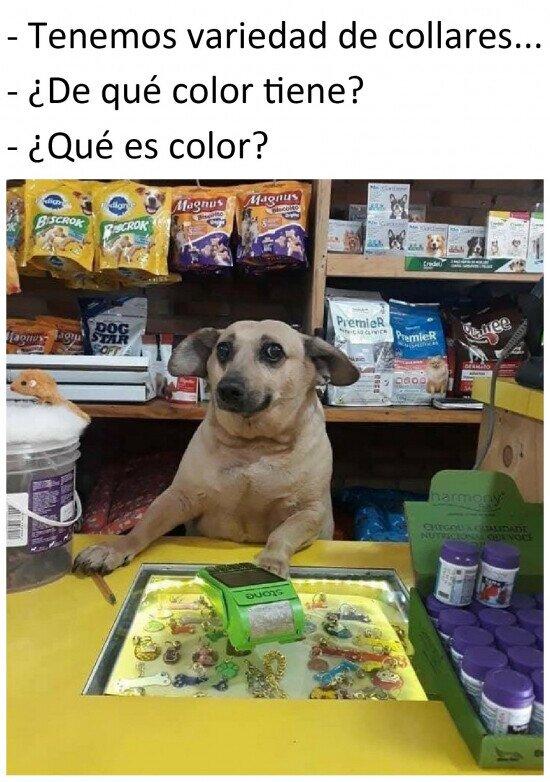 Si los perros vendiesen souvenirs