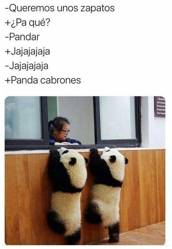 ¡Menuda panda!