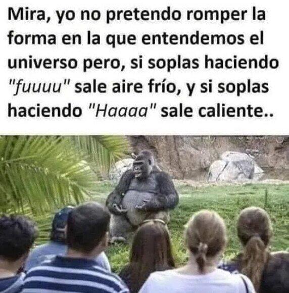 El gorila sabio