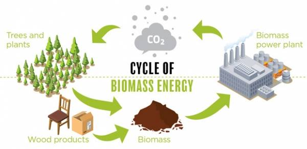 Biomass Energy Learn About The Pros And Cons Suaoki