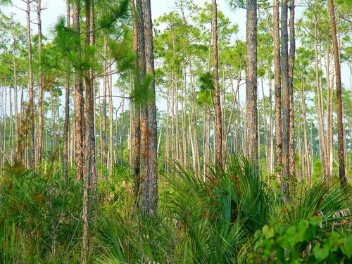 pinelands by nationalparklover