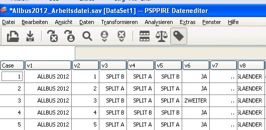 PSPP Datenfenster