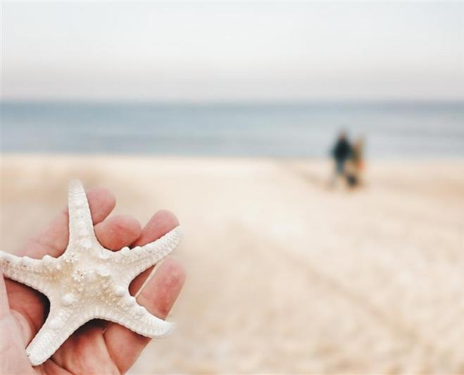 Starfish Souvenir from the Baltic Sea.