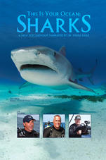 This is Your Ocean Sharks - on iTunes and Amazon.