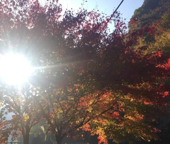 奥多摩湖の美しい紅葉