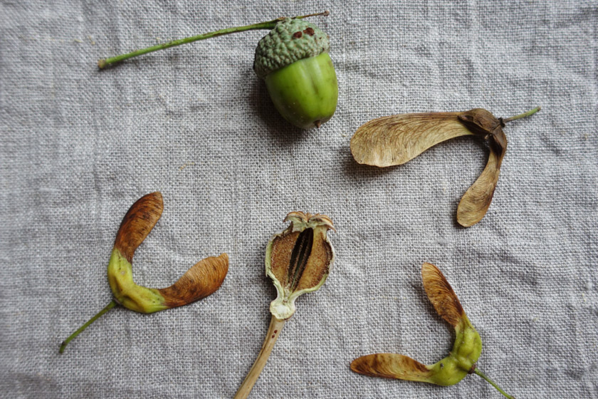 Seed heads and pods