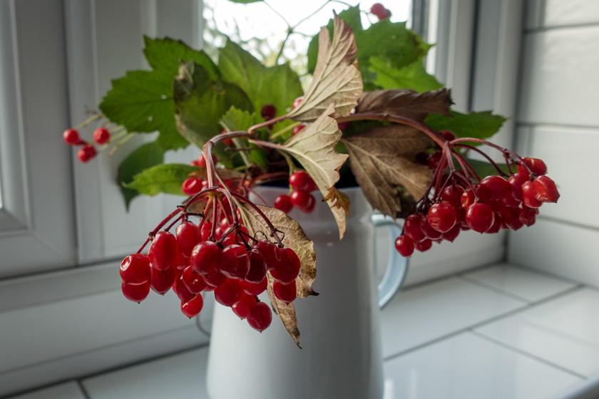 Red berries in enamel jug