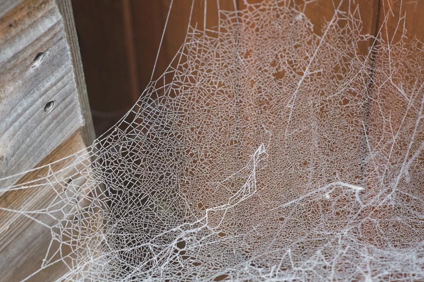 Lace like cobweb