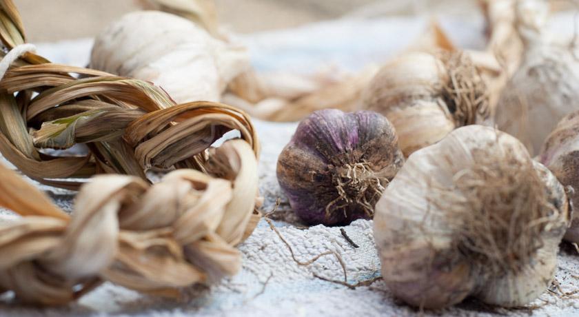 Dried garlic on a tea towel