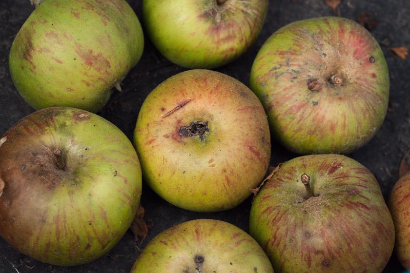 Blemished cooking apples