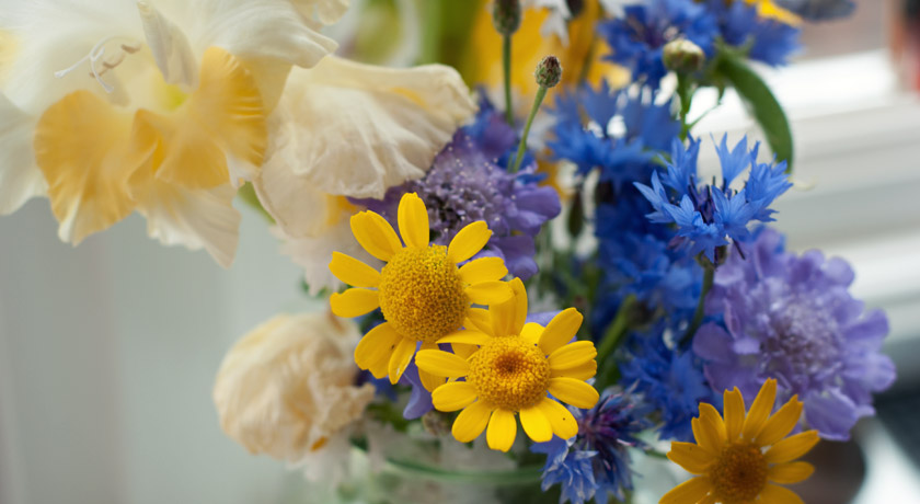 Blue and yellow wild flowers