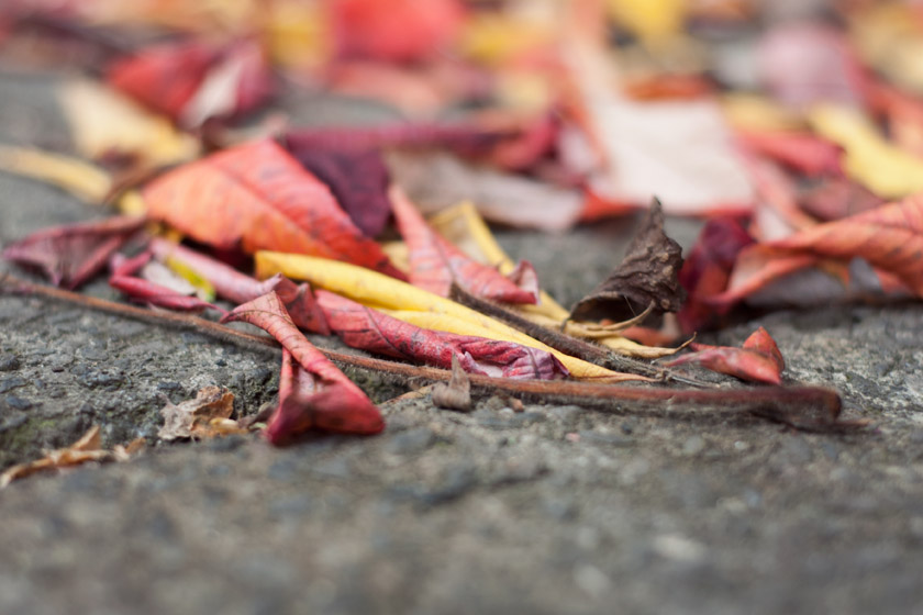Red, orange and yellow leaves