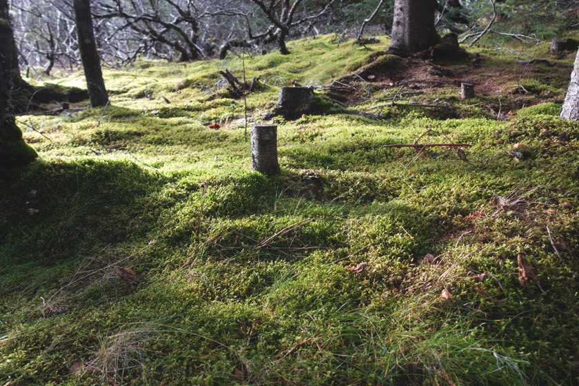 Trees on moss