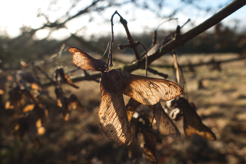 Seed pods in the sun