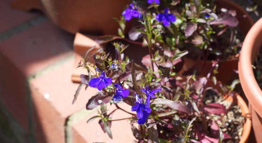 Bright purple flowers