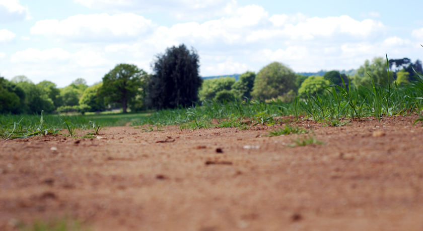 Ground level field view
