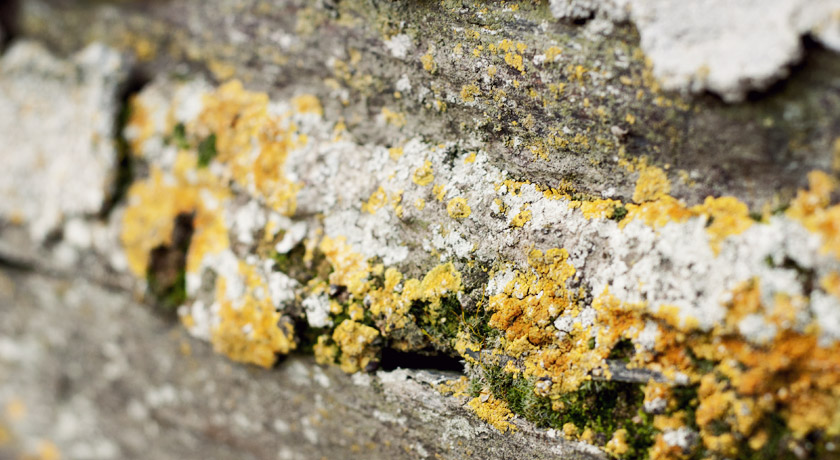 Yellow and white lichen growing on a wall