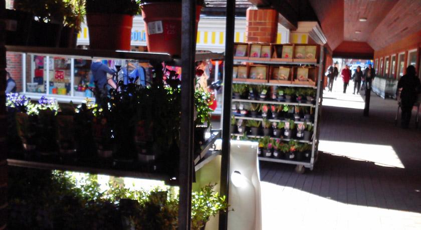 Plants for sale at Waitrose