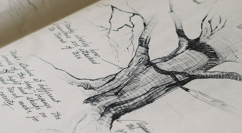 Pencil drawing of a tree