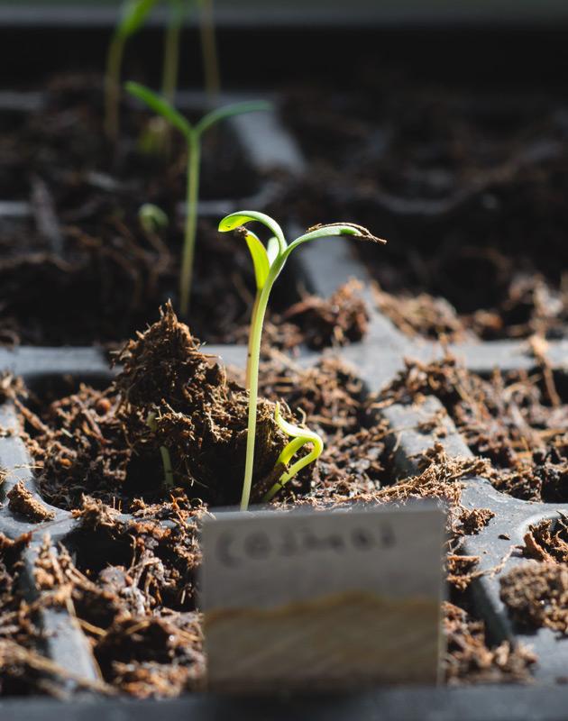 Seedling in sunlight