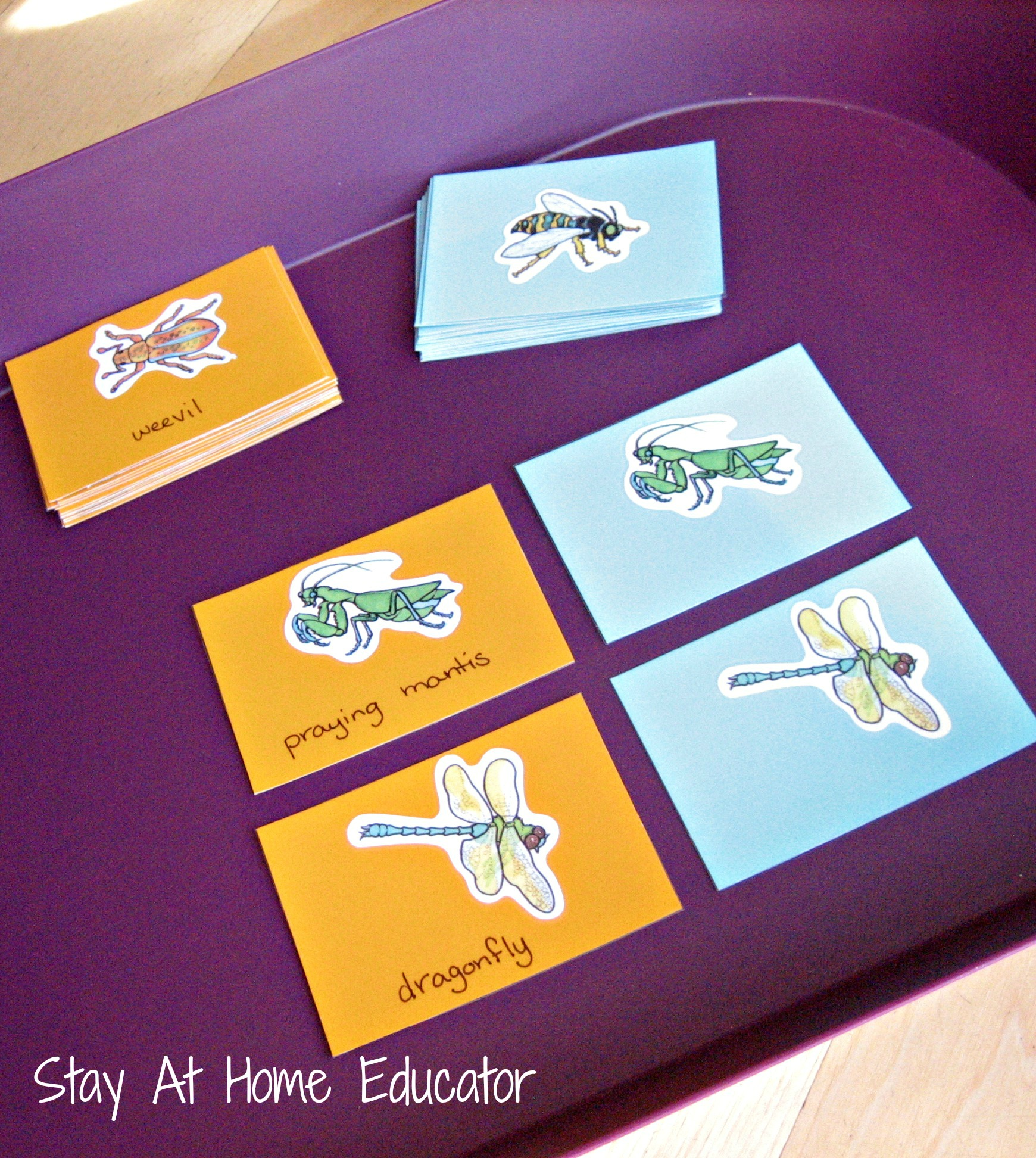 Insect Matching Activity