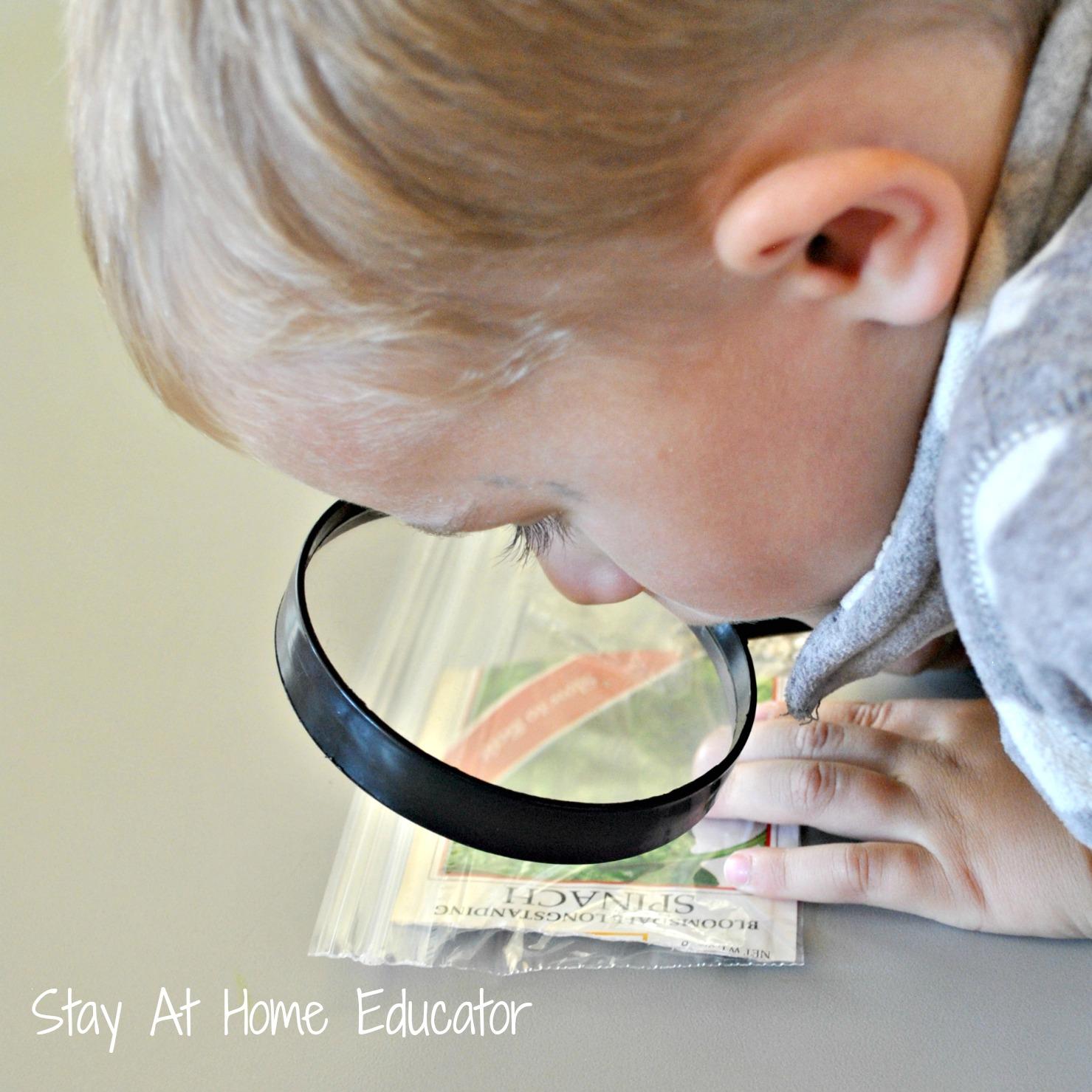 Investigating Seeds In Preschool Farm Theme