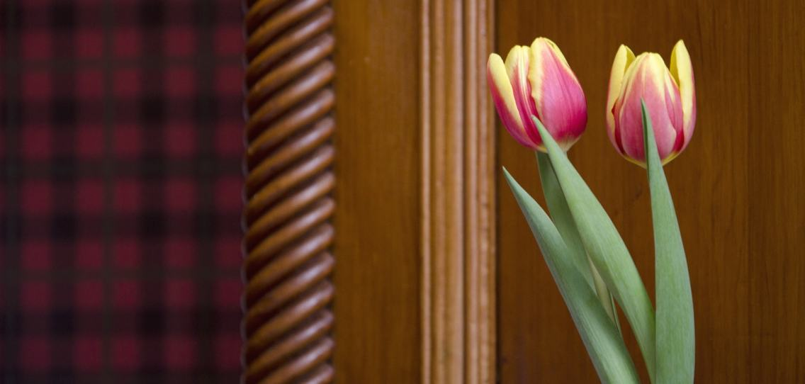Yellow and red tulips with green leaves in front of an oak panel with intricate carving at Strathallan Guest House