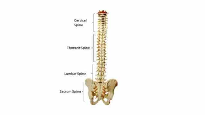 can chiropractor fix pinched nerve