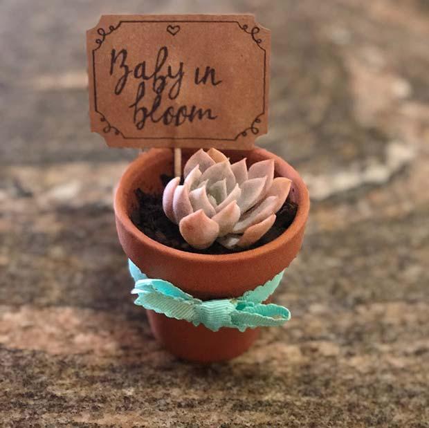 Succulent Favor Idea - Baby in Bloom
