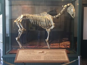 A skeleton is displayed in the main area of the barn