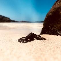 Enjoy the beautiful beaches of Fuerteventura
