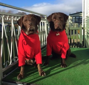 Daisy and Murphy were the two friendly labradors who helped the VisitEngland inspector assess the park's Fido-friendly facilities