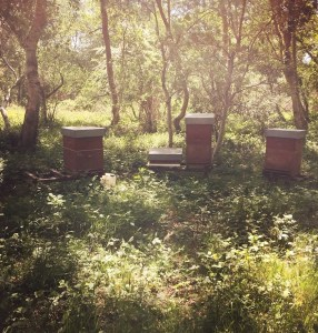 Honey-bee hives are hidden in a quiet corner of the park's woodlands