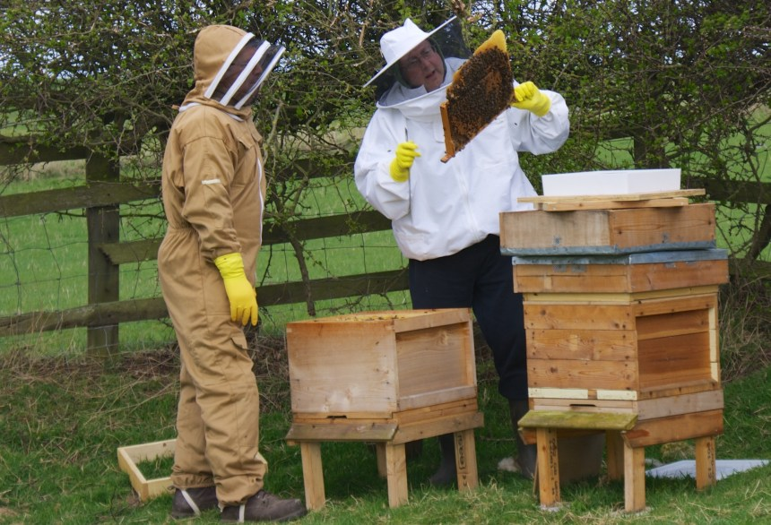 Drovers Way is a haven for birds… and bees, thanks to the two hives (above) which the park maintains