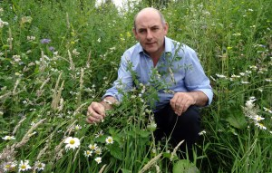 Part of Moss Wood's wild flower wilderness praised by judges