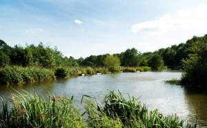 All angling skills are met with the park's well-stocked fishing ponds