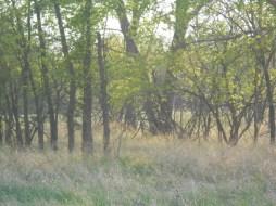 Richard St. Barbe Baker Afforestation Area, West Swale Saskatoon, Saskatchewan, Canada