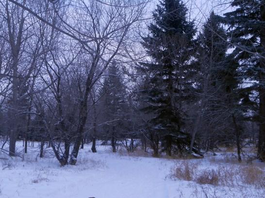 Richard St. Barbe Baker Afforestation Area, Saskatoon, SK, CA Winter
