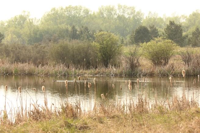 West Swale Wetlands (Chappel Marsh) Richard St. Barbe Baker Afforestation Area, Saskatoon, SK, CA