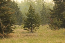 Richard St. Barbe Baker Afforestation Area, Saskatoon, Saskatchewan
