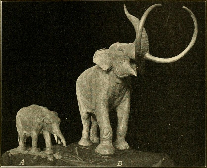The_age_of_mammals_Mammoths