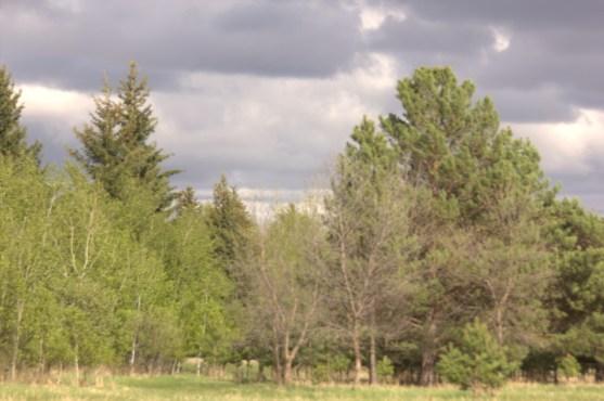 Richard St. Barbe Baker Afforestation Area Saskatoon, Saskatchewan