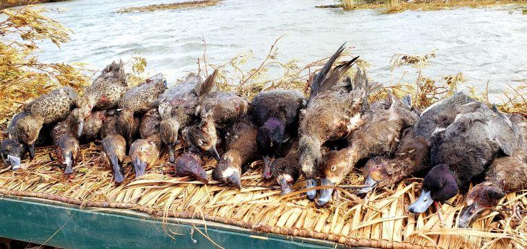 124381398 372038517450835 4181021003207472697 n 2 St. Clair Duck Hunts
